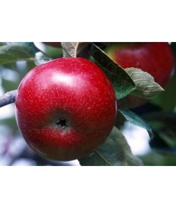 Fruit Apple Empire