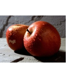 Fruit Apple Fuji ESPALLIER 2 TIER