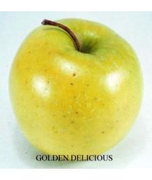 Fruit Apple Golden Del ESPALLIER 2 TIER