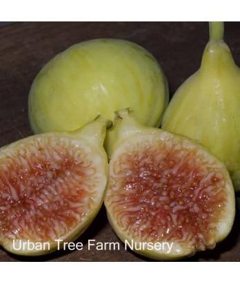 Fruit Fig Excel