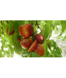 Fruit Nectarine Arctic Glo
