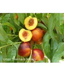 Fruit Nectarine Double Delight
