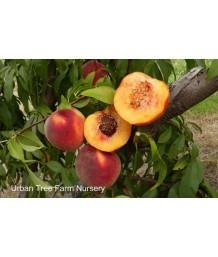 Fruit Peach Suncrest