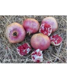 Fruit Pomegranate Pink Satin
