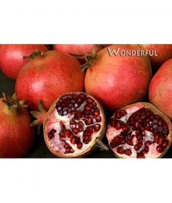 Fruit Pomegranate Wonderful STD