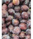 Fruit Prune Early Italian