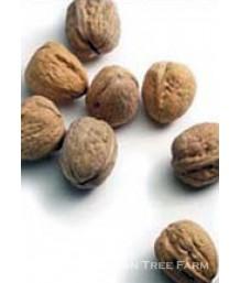 Fruit Walnut Hartley
