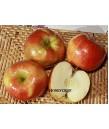 Fruit Apple Honeycrisp