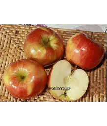 Fruit Apple Honeycrisp