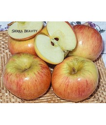 Fruit Apple Sierra Beauty