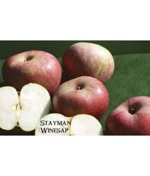Fruit Apple Winesap