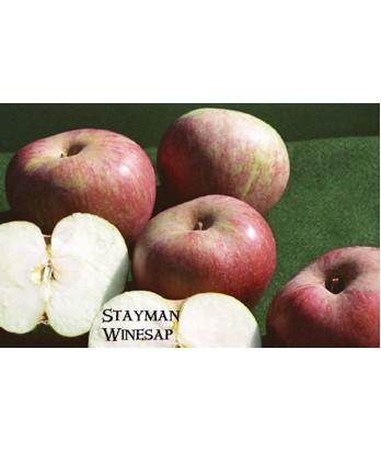 Fruit Apple Winesap
