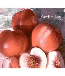 Fruit Nectarine Arctic Jay