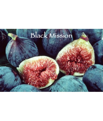 Fruit Fig Black Mission