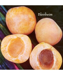 Fruit Apricot Royal Blenheim