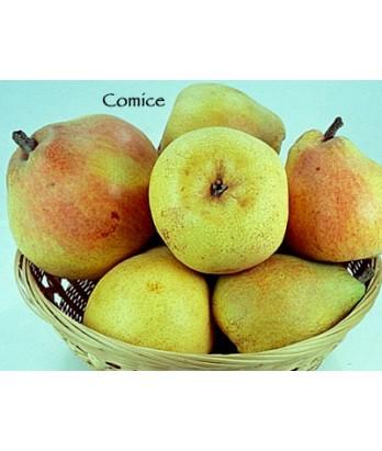 Fruit Pear Comice