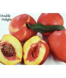 Fruit Nectarine Double Delight