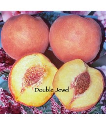 Fruit Peach Double Jewel