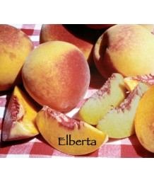 Fruit Peach Elberta