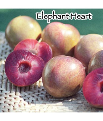 Fruit Plum Elephant Heart