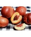 Fruit Nectarine Fantasia