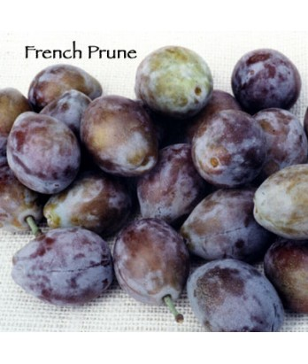Fruit Prune French Improved