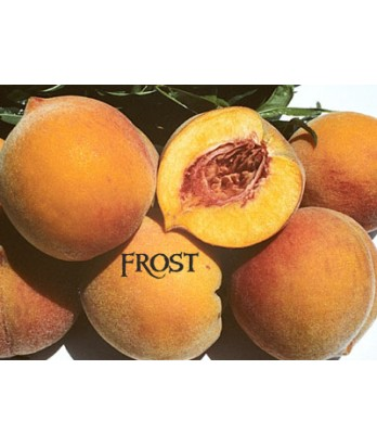 Fruit Peach Frost