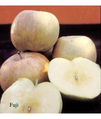 Fruit Apple Fuji