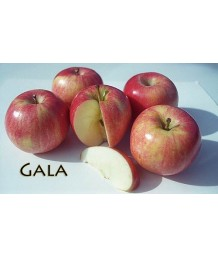 Fruit Apple Gala