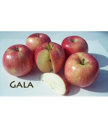 Fruit Apple Gala