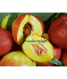 Fruit Nectarine Garden Delight