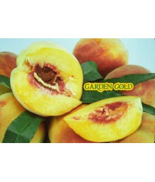 Fruit Peach Garden Gold
