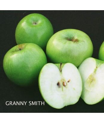 Fruit Apple Granny Smith