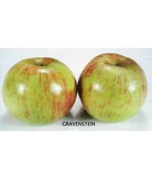 Fruit Apple Gravenstein, Green