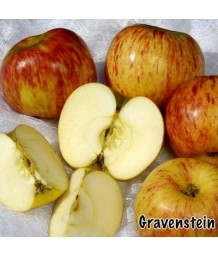 Fruit Apple Gravenstein, Red