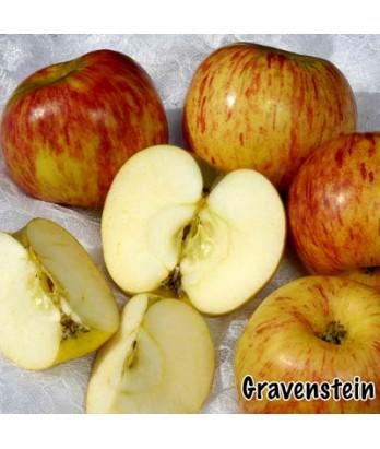 Fruit Apple Gravenstein, Red