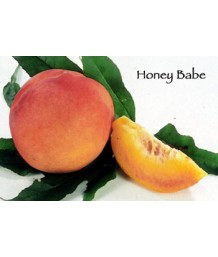 Fruit Peach Honey Babe