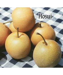 Fruit Asian Pear Hosui
