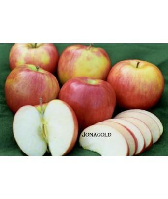 Fruit Apple Jonagold
