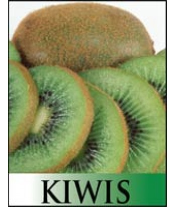 Fruit Kiwi All Purpose Male