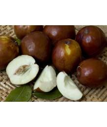 Fruit Jujube Li