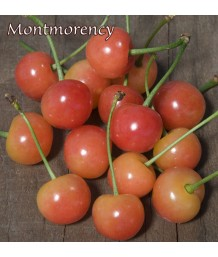 Fruit Cherry Montmorency