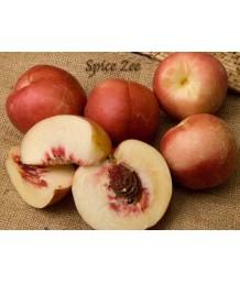 Fruit NectaPlum Spice Zee