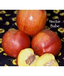 Fruit Nectarine Nectar Babe