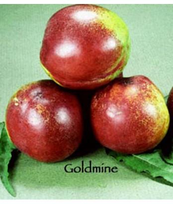 Fruit Nectarine Goldmine White
