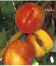 Fruit Nectarine Harko