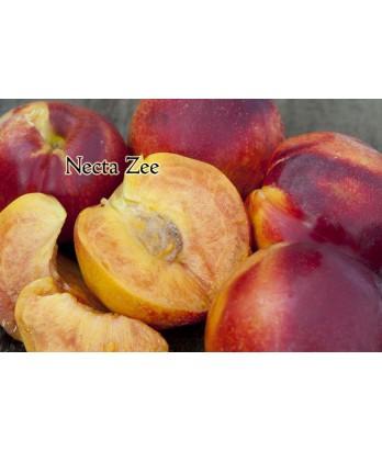 Fruit Nectarine Necta Zee