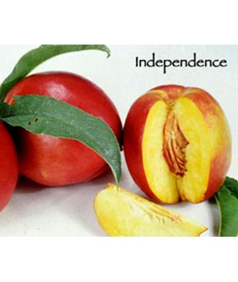 Fruit Nectarine Independence