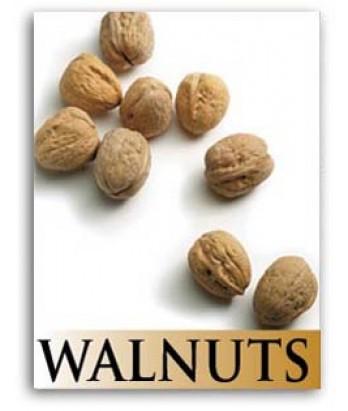 Fruit Walnut Franquette
