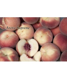 Fruit Peach Arctic Supreme